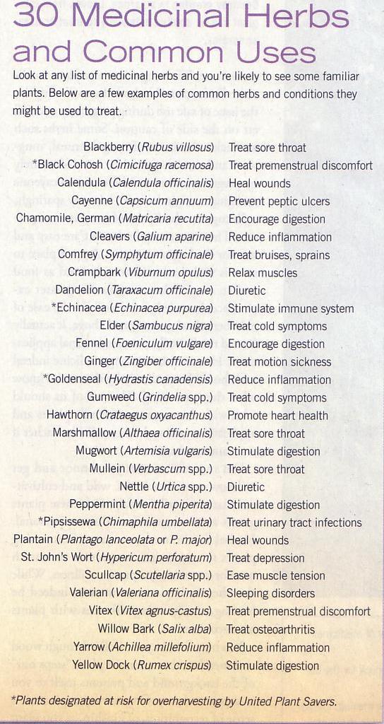 Save on Health Care - Healing Herbs - Cheapo Groovo